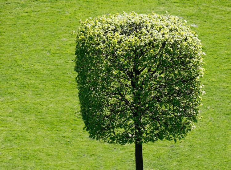 Hainmüller Gartengestaltung Sorglos Gartenpflege